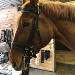 custom designed double bridle on red horse