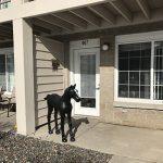 Porch Pony